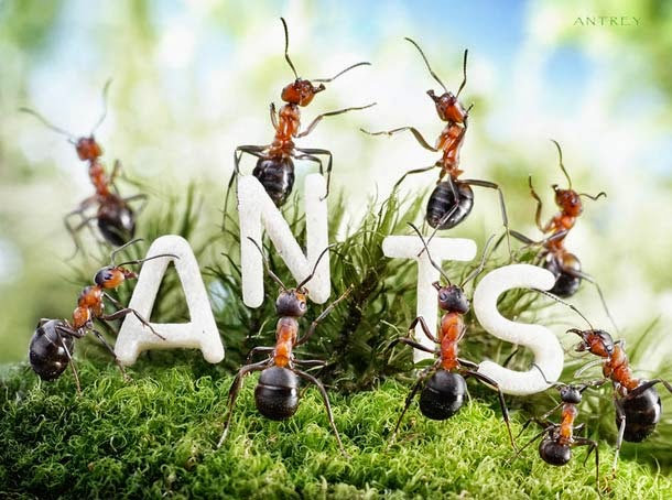 Ants Activities by Andrey Pavlov