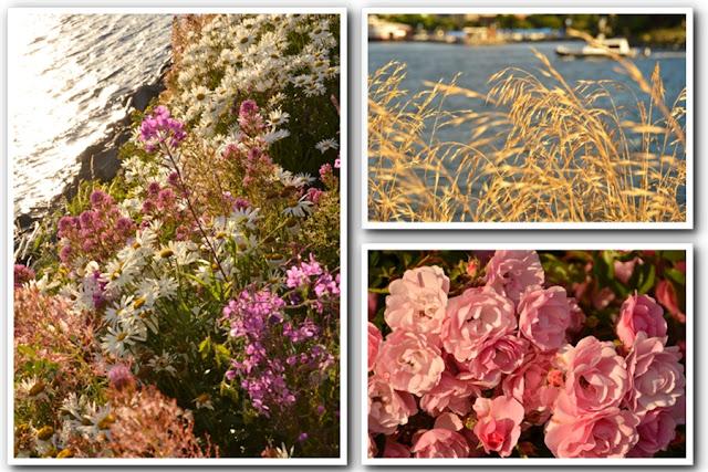 Victoria Tourist - More Esquimalt Flowers