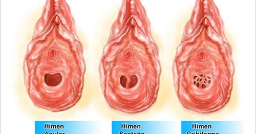 La mirada interior de la vagina