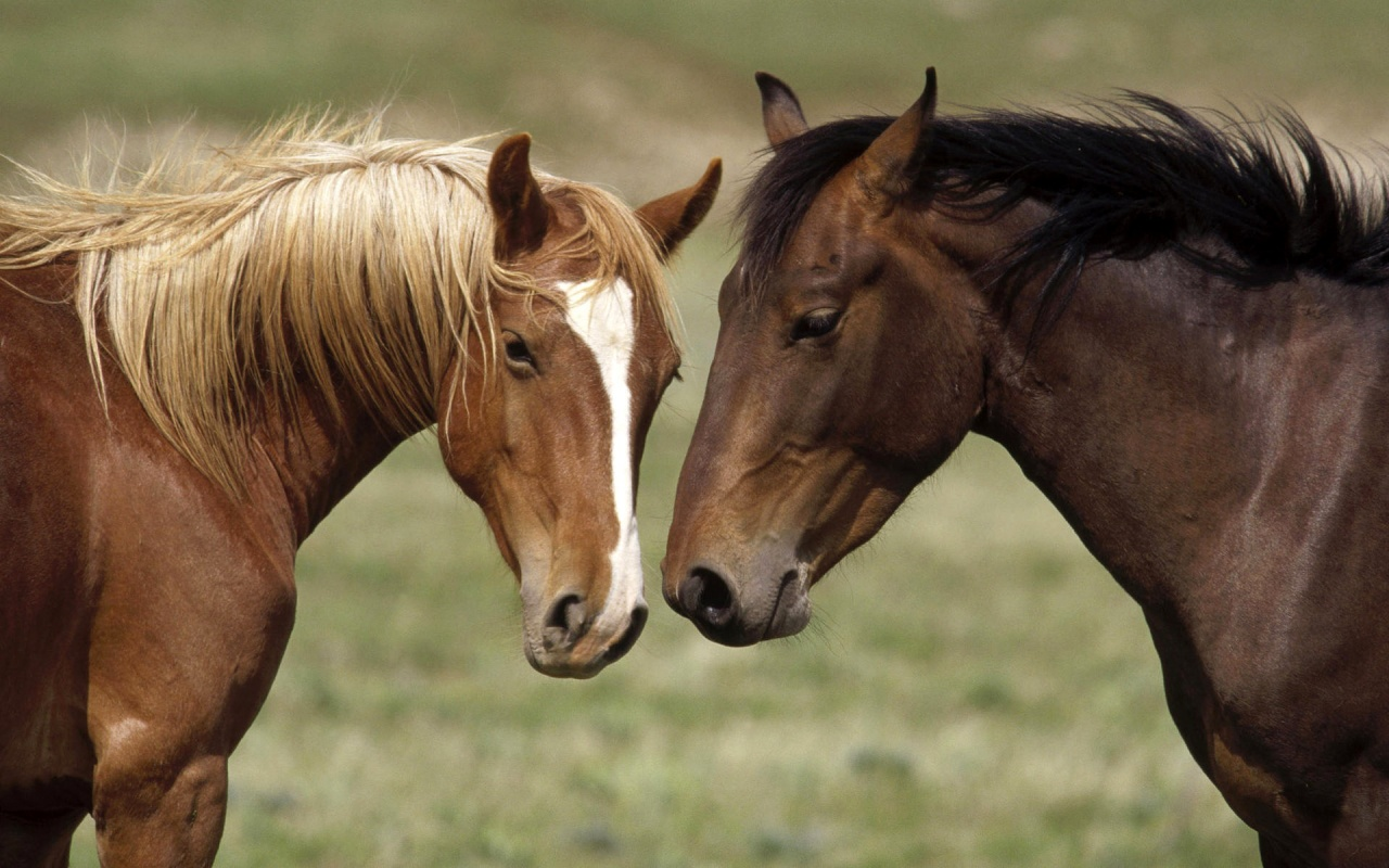 Wild horses grouped hd wallpapers beautiful wild pets for Beautiful horses