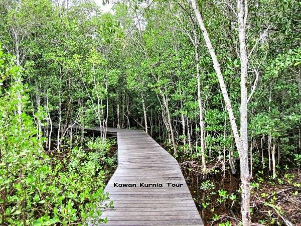 jalan dalam hutan mangrove