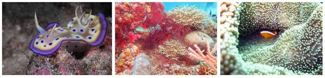 populer dengan keindahan lautnya yang berada di  Diving - Wisata Bahari Halmahera Barat