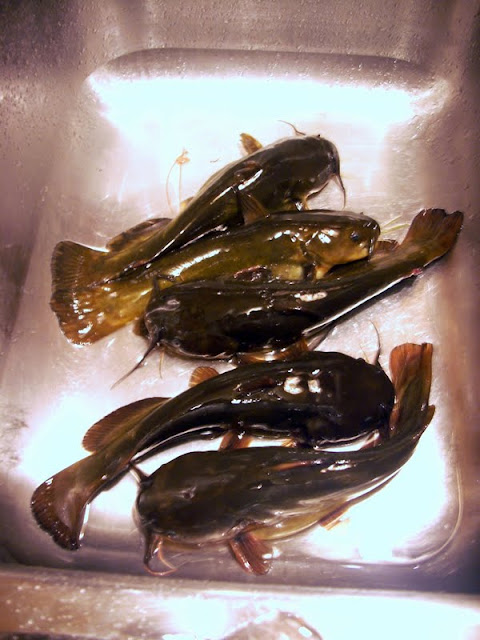 How to cook a bullhead