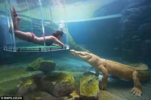 Menyelam Bersama Buaya Terbesar Di Dunia