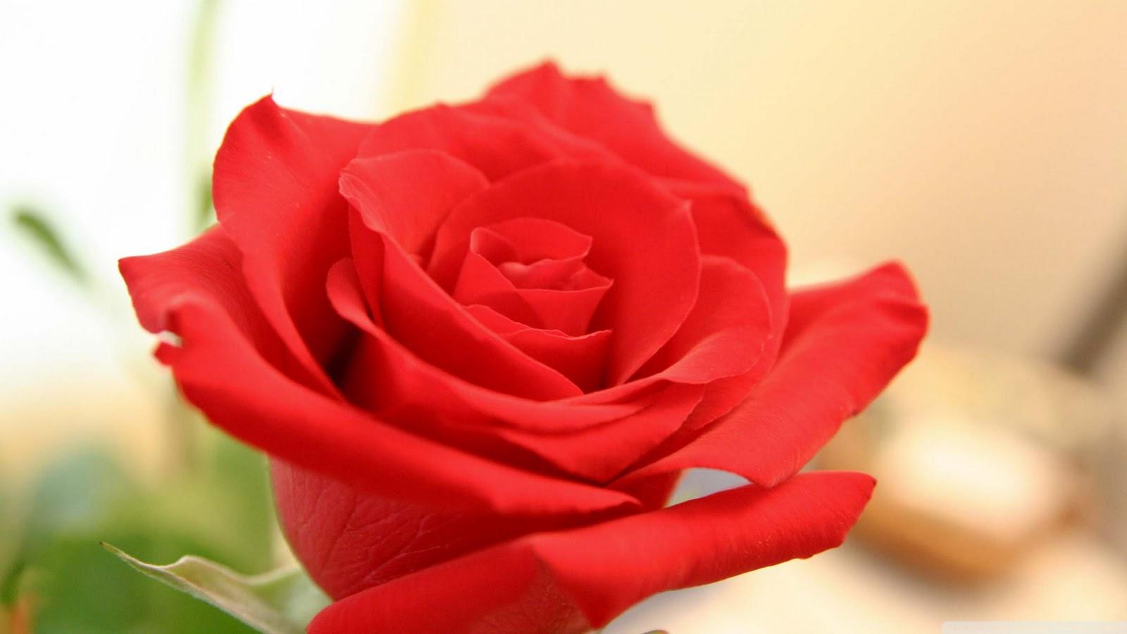 http://3.bp.blogspot.com/-5xv4VDhnjiU/TyuR5fuVHfI/AAAAAAAAAJE/FmI-rI4RKn4/s1600/beautiful_flowers_2-wallpaper-2400x1350.jpg