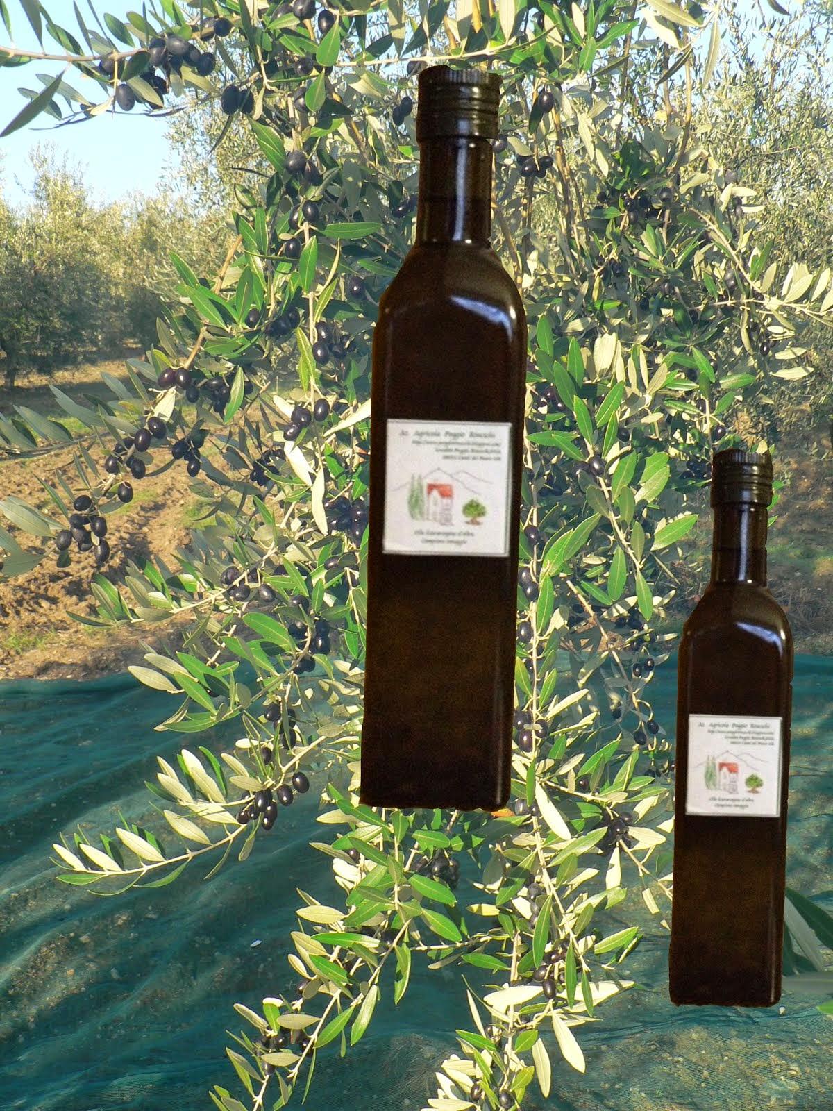 Tra poco inizia la Raccolta delle Olive, non vediamo l'ora di assaggiare il nostro nuovo olio