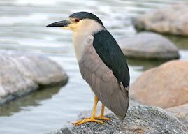 U.P. BIRDS