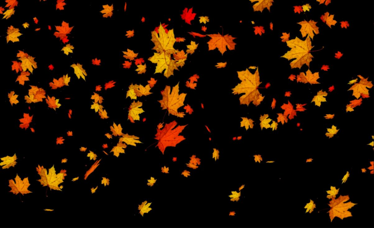 Leaves Falling Free Live WP   Android Apps on Google Play