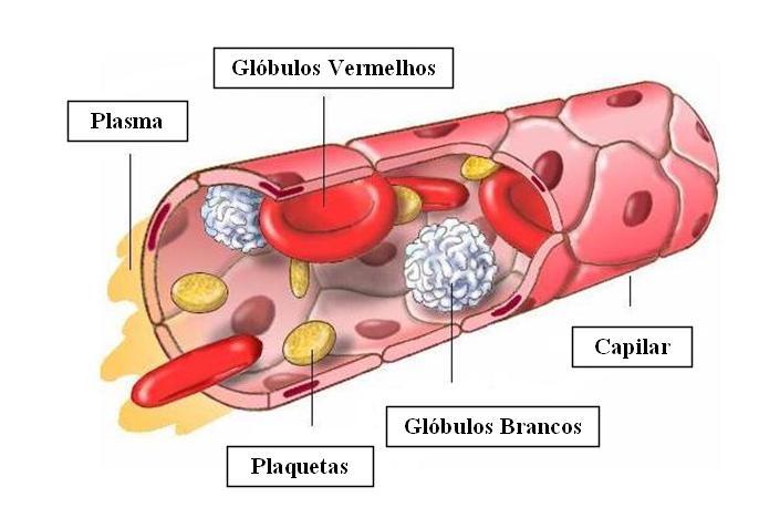 Exame de sangue plaquetas