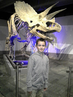 boy in front of a Triceratops