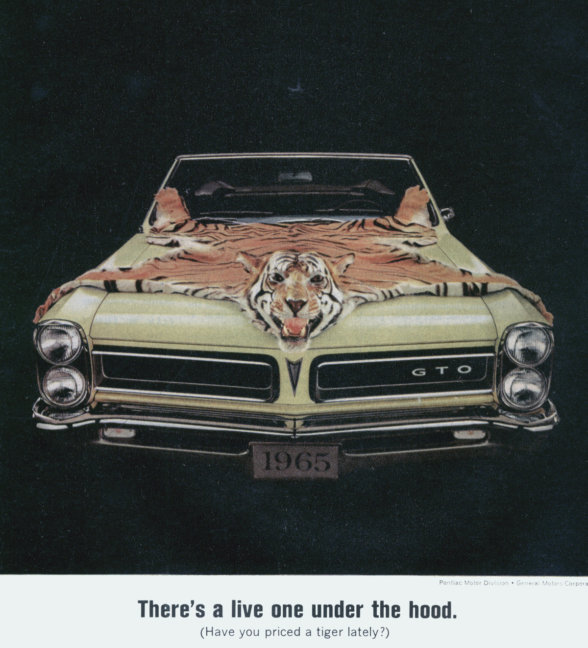 Promofile Crouching Tiger Hidden Burnoutsgto Ads In The 1960s 1960 Pontiac Catalina Wiring Diagrams Gto And Appeared Vivid Form 1965 With A Startling Picture Of Mayfair Maize Convertible Black Morrokide Interior Skin