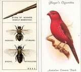 """""""Εφήμερα"""" στο biology illustrations"""