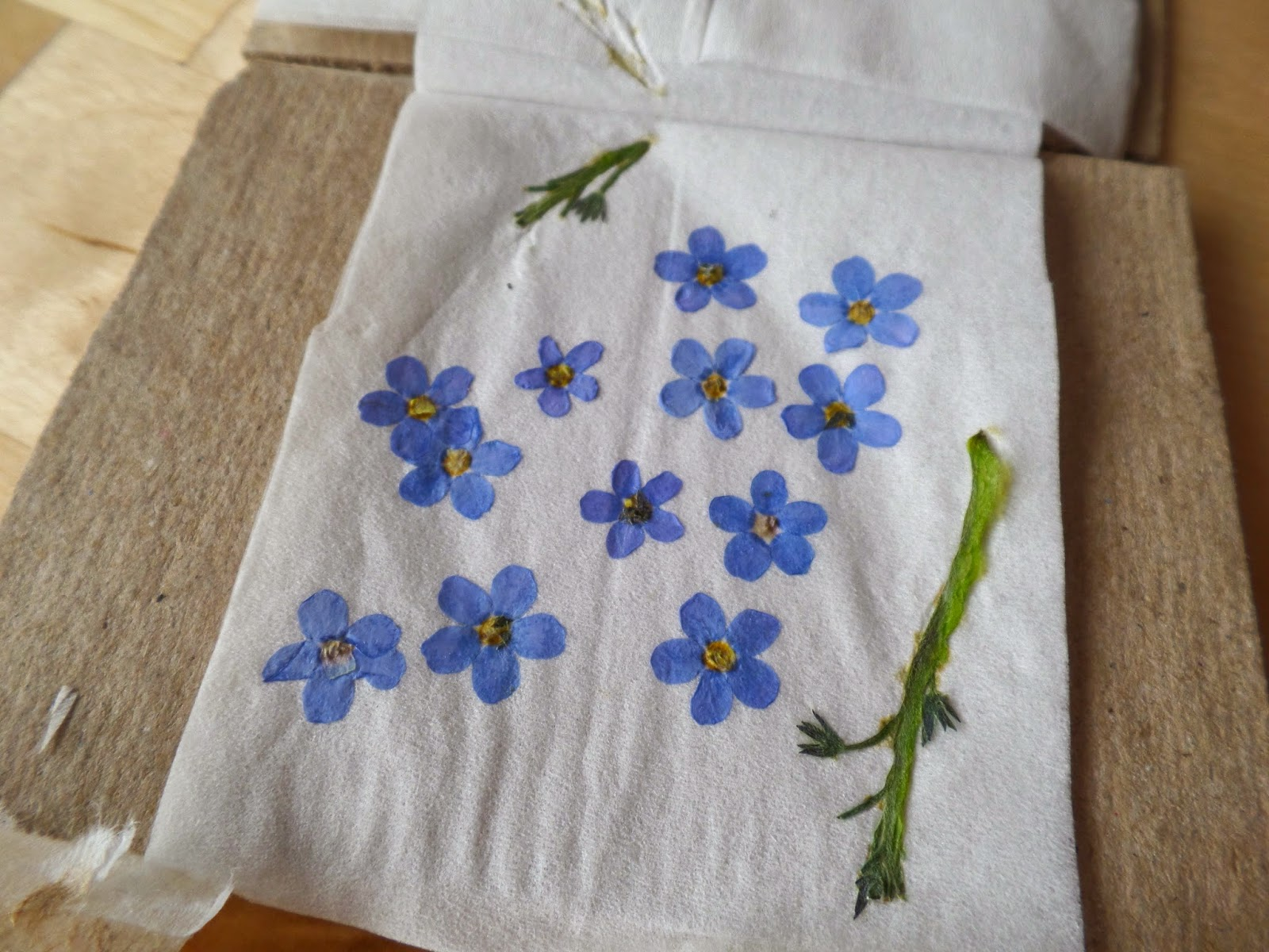 forget me knot pressed flowers