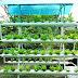 Bật mí bí quyết trồng rau sạch không cần đất