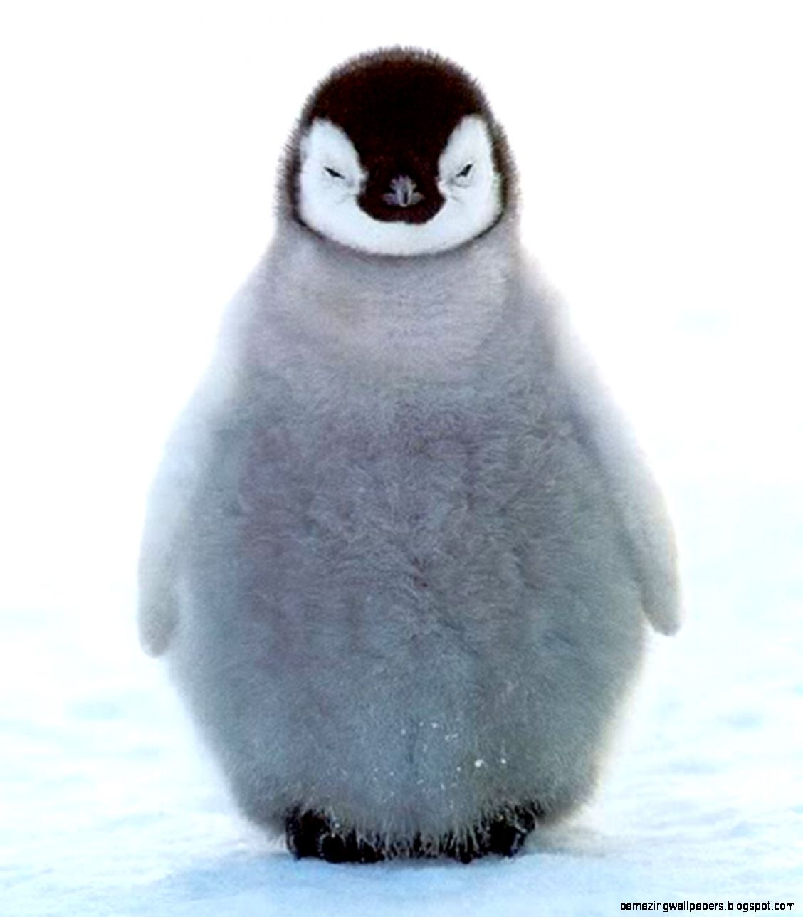 8 Baby Penguins That Are Pretty Cute But Don39t   ClickHole