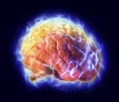 عشر حقائق يجهلها الكثير عن المخ البشري وأعضاء أخرى فى أجسادنا .