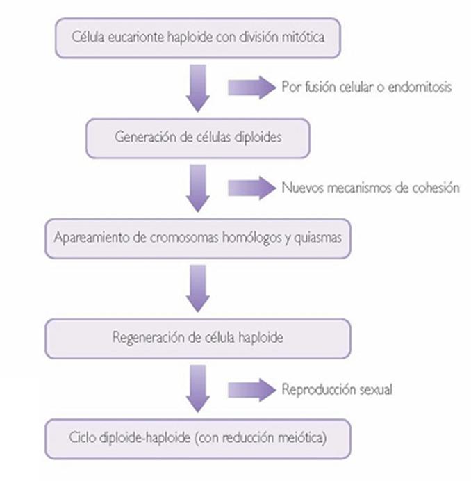 La Meiosis y la Reproducción Sexual