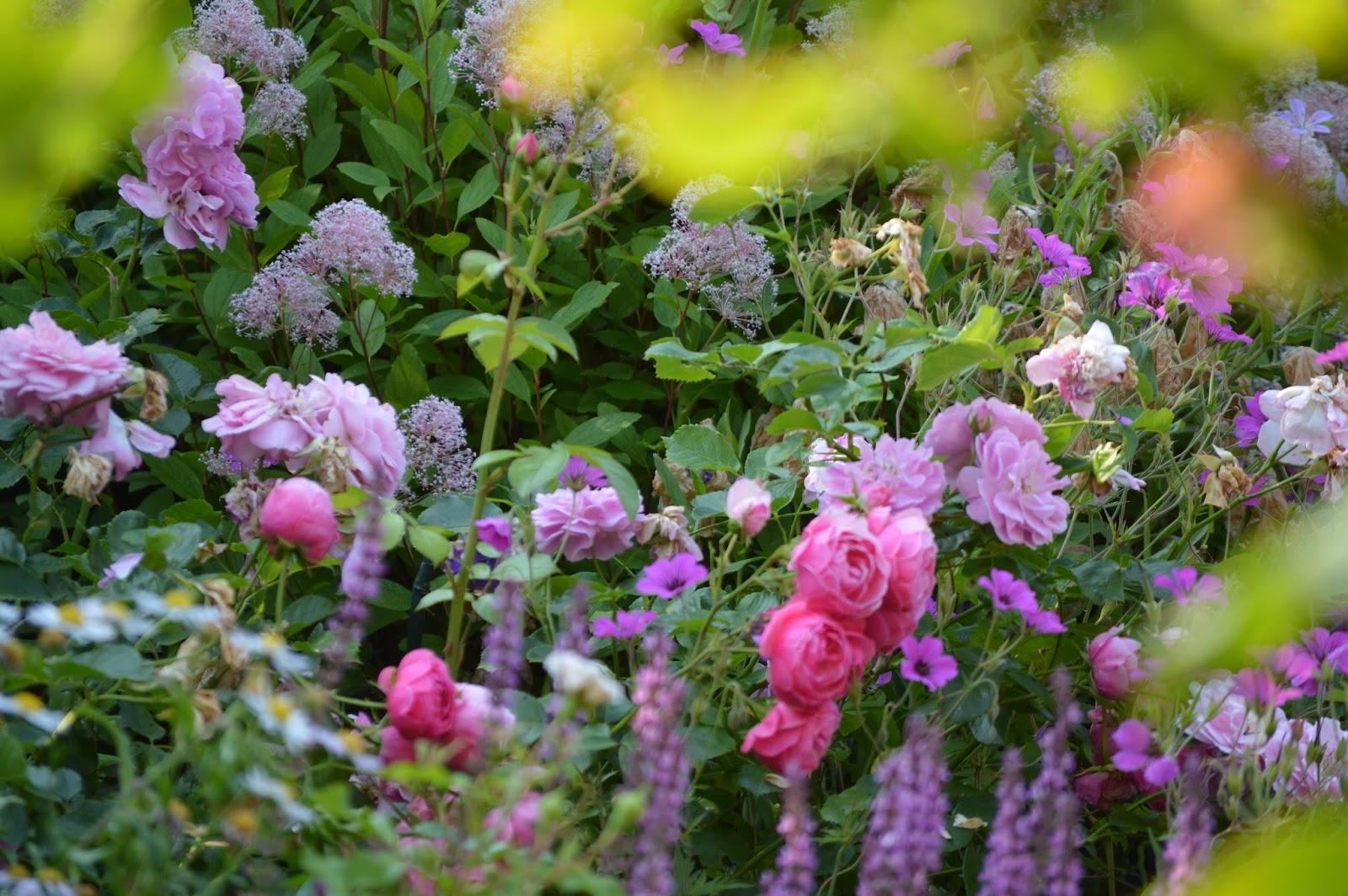 Passionn ment jardin au petit d jeuner for Au petit jardin proven