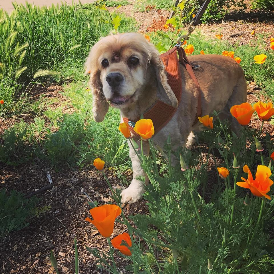 RIP - 15 year old Sunny who loved to stop and smell the flowers
