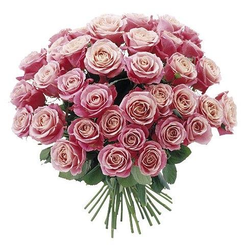 Happy Valentine U0026 Zwei Star Looks