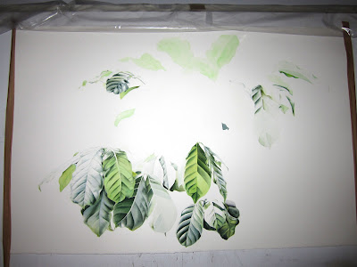 The coffee plant - a work in progress