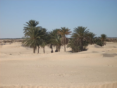 douz tunez