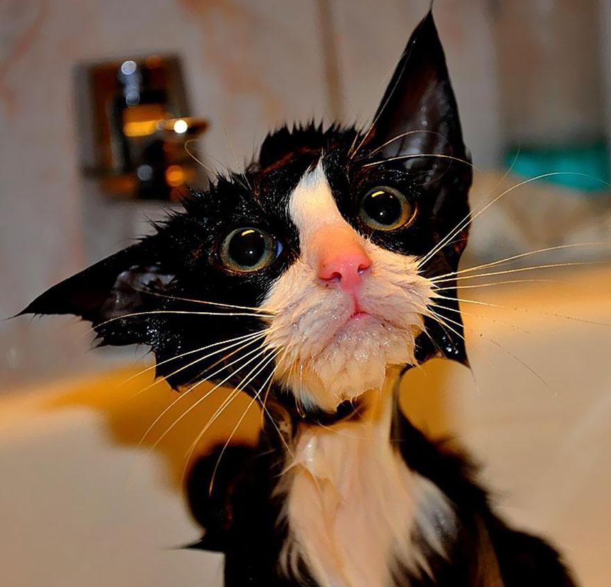 Siderurgikatv 22 divertenti foto di gatti che fanno il bagno - Bambolotti che fanno il bagno ...