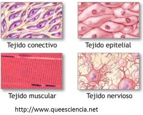 Células, tejidos y sistemas del cuerpo humano | Anatomía y biomecánica