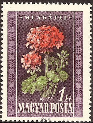 1950 Magyar Posta - Muskatli, Pelargonium Zonale