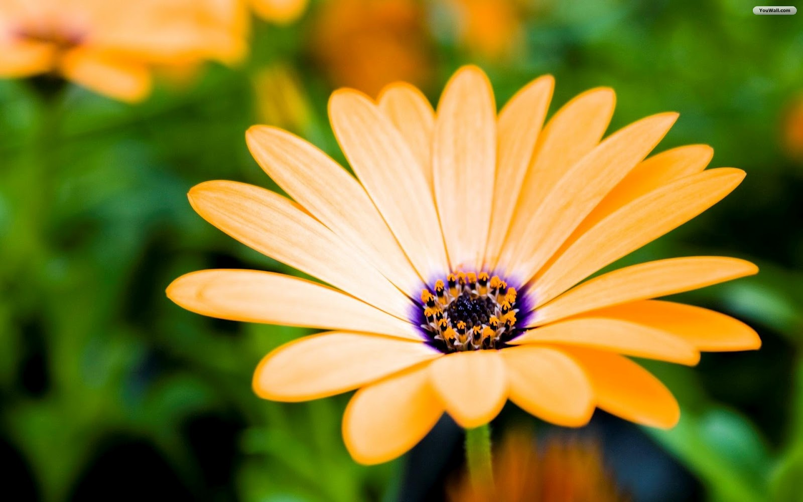 All photos gallery: Free flower wallpaper, free flowers ...