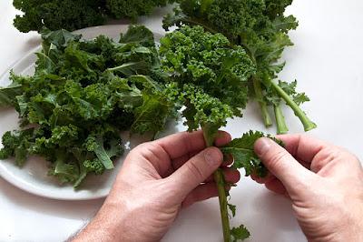 Trganje listkov kodrolistnega ohrovta - Kale