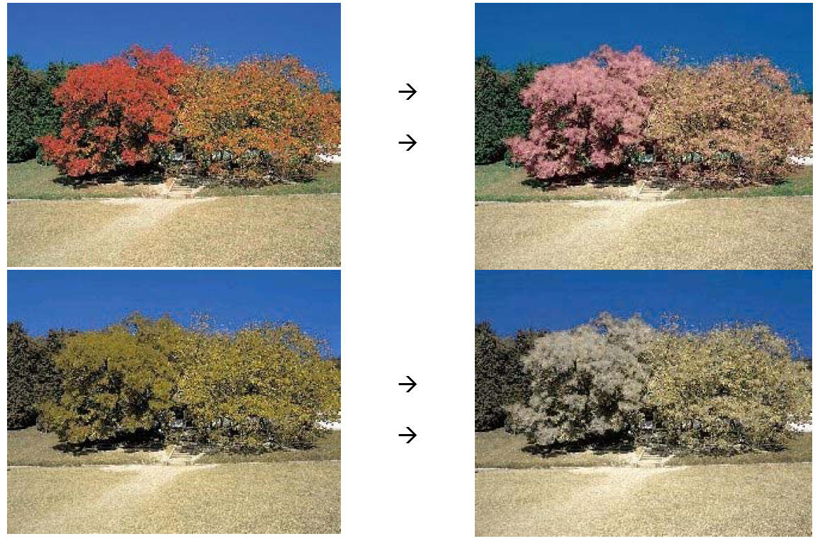 ... everyday scenarios to visualize how Colour Blind people see the world