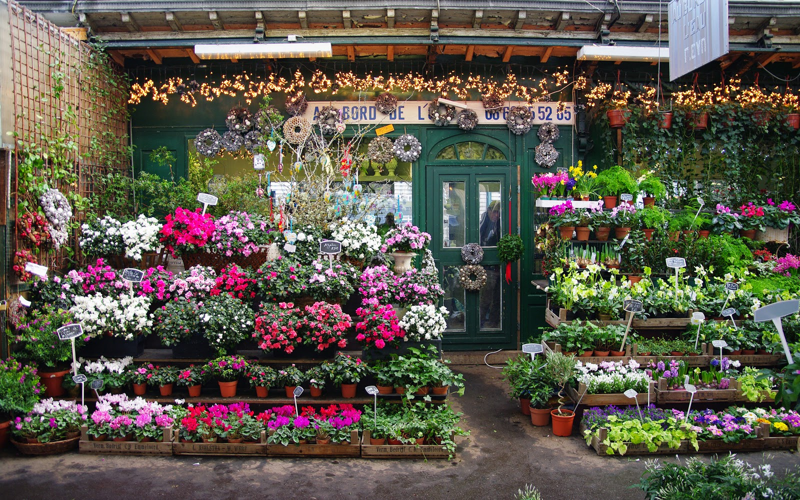 Online Flower Shops in Malaysia