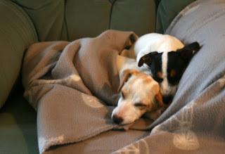 Snuggled puppies