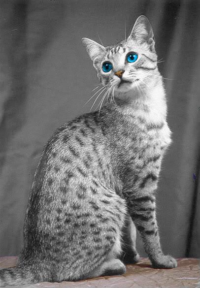 can a cat break its tail