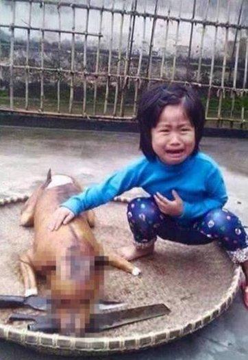 O assassinato desses animais é uma prática comum em alguns países asiáticos Foto: Reprodução/DailyMail