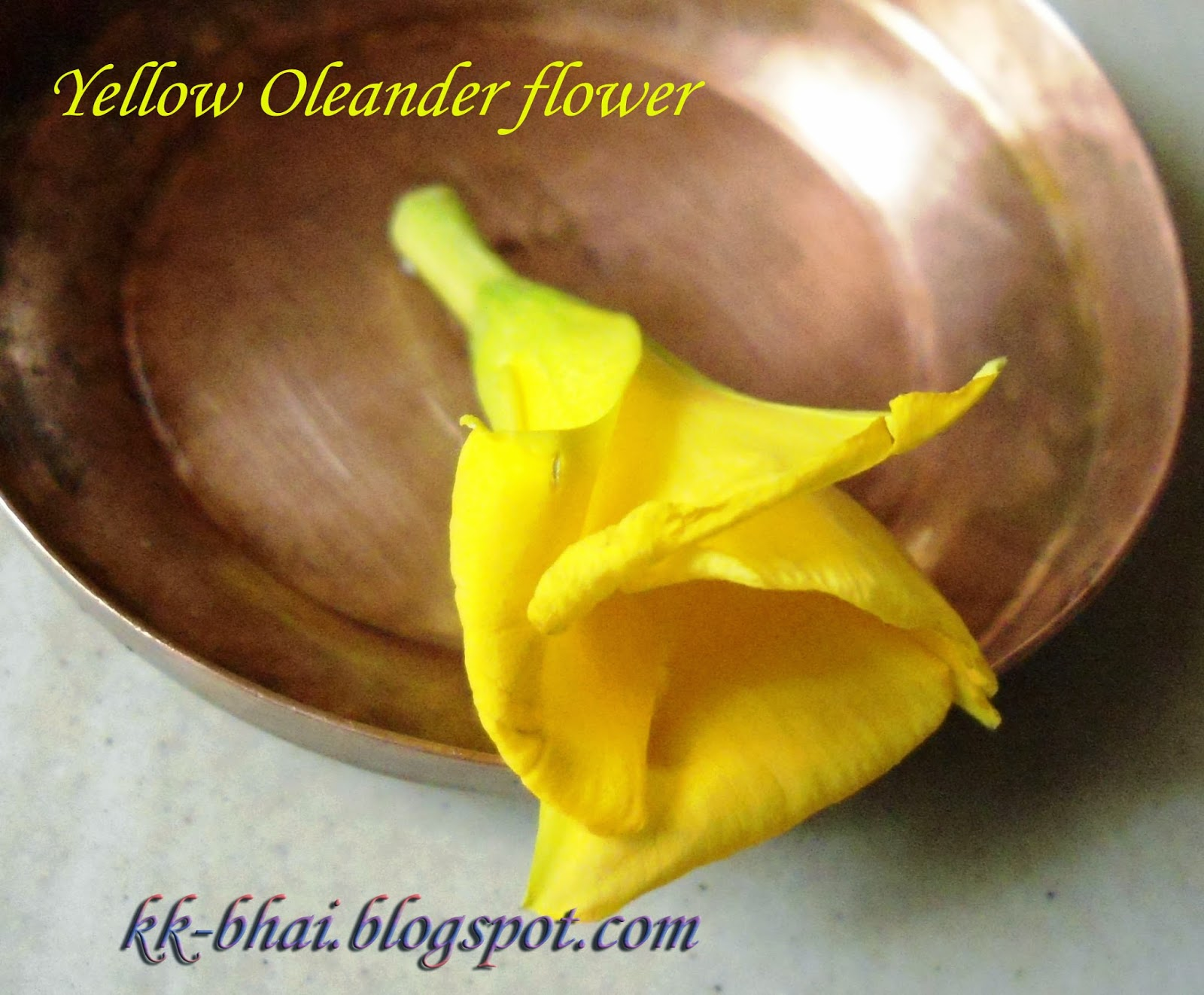 Puja flowers and other things used in puja worship this is a funnel shaped flower of mostly deep yellow color but sometimes white or reddish yellow colored flower may also be found dhlflorist Image collections