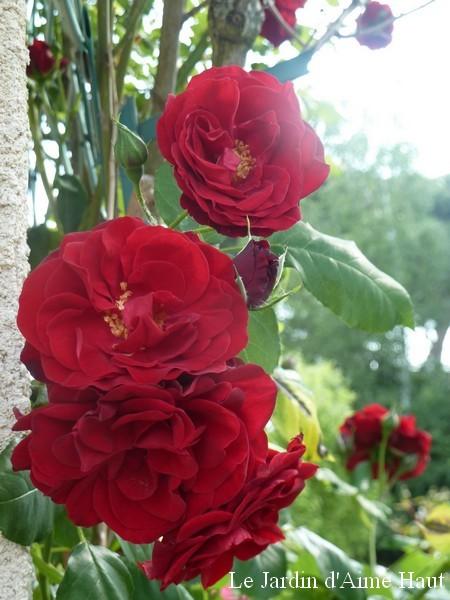 N oublie pas les roses