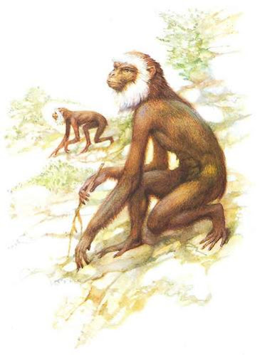 primates extintos en europa Pliopithecus