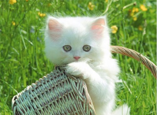 To Save Cute Kittens Wallpaper As Your Desktop Place Mouse Pointer Over The Image Click On Right Button