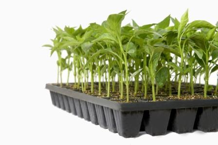 Κατάλογος βιολογικών κηπευτικών φυτών 2019