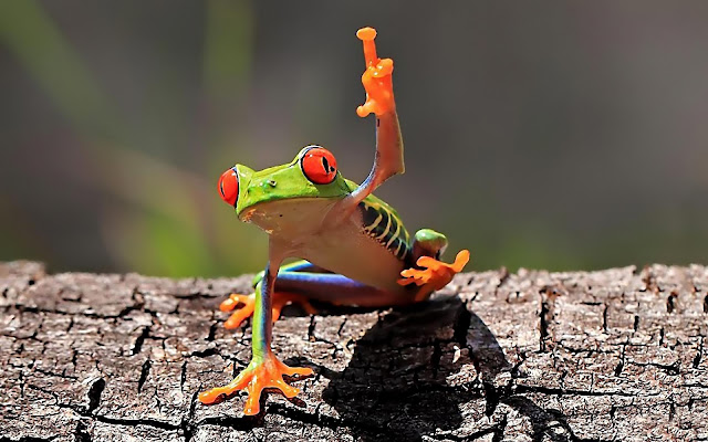 One Little Funny Frog