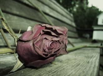 كلام حزين في الحب - وردة زهرة ذابلة دبلانة ذبلانة مكسور
