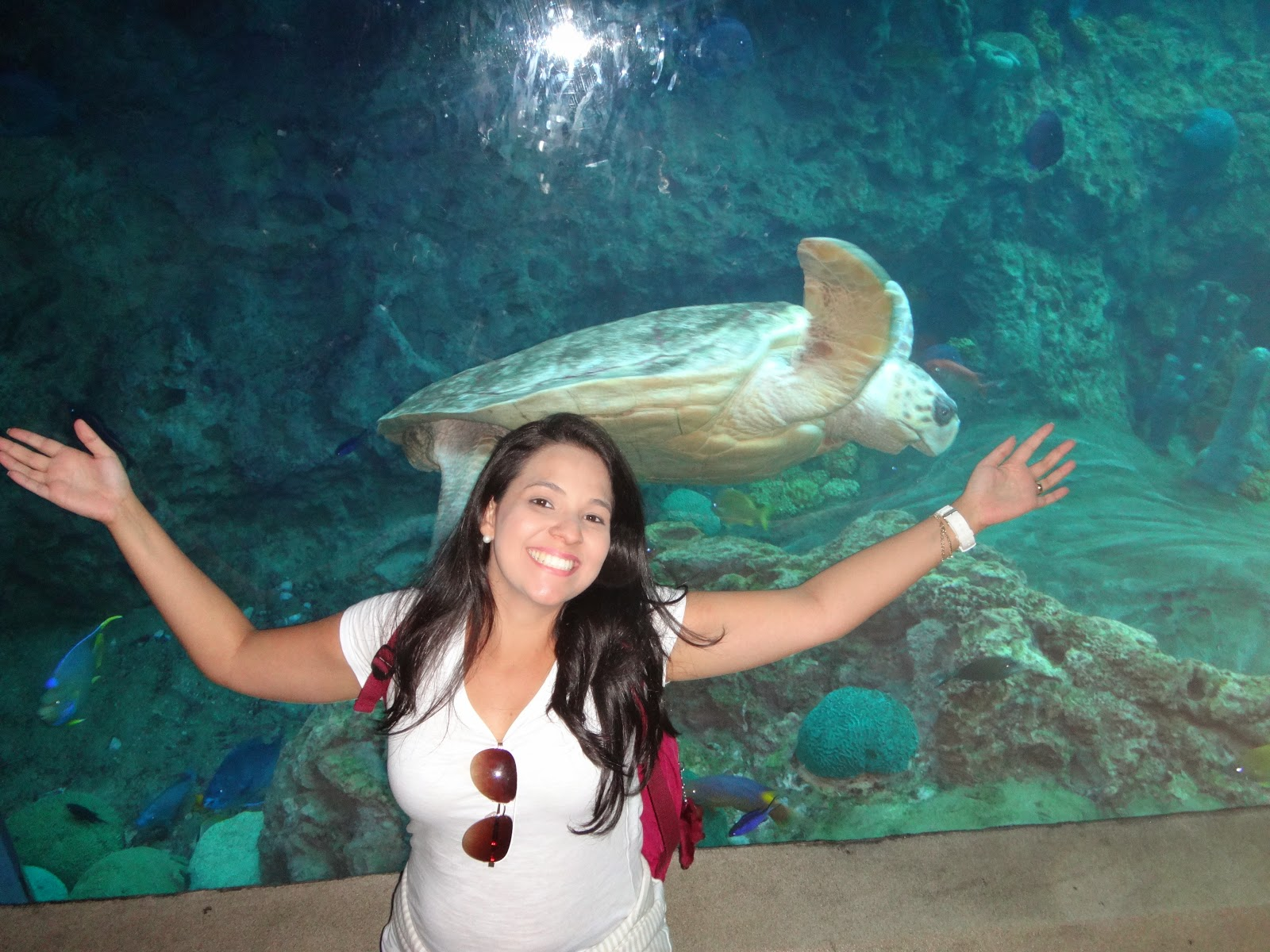 aquario - parque sea world - orlando, florida