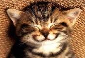 Anak Kucing Sedang Senyum
