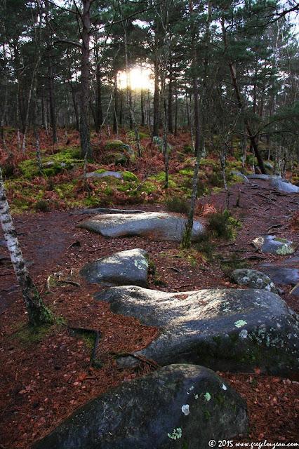 Platière des Gorges d'Apremont après la pluie, Forêt de Fontainebleau, Barbizon, (C) 2015 Greg Clouzeau