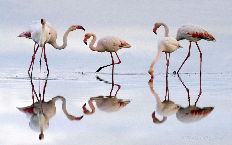 Bollywood Hd Wallpapers 1080p Flamingo Hd Wallpapers