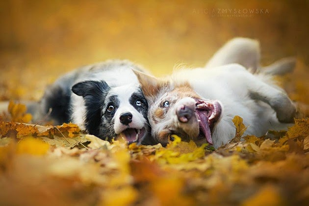 heartwarming photos, beautiful animals,