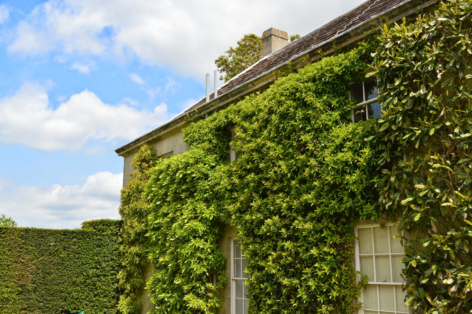 photograph, photo Petworth House and Gardens, review, visit, National Trust, west Sussex, historical home, building, 17th century, property, Percy family, England, servants quarters, house covered in foliage