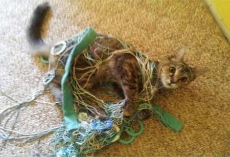 cum arata pisica lui Bula